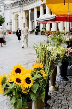 flowers on the street