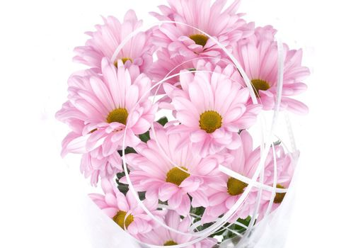 close-up pink chrysanthemum flowers bouquet, isolated on white