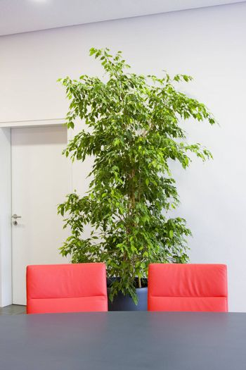 Two red chairs in a meeting room with green plant and white door in the background