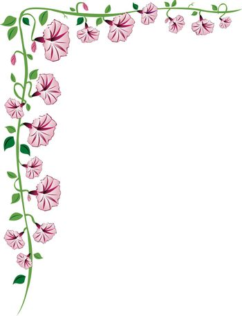A morning glory vine border with pink flowers, leaves and buds.