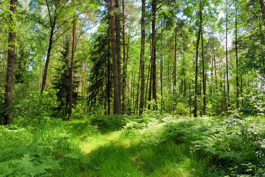 Summer forest in a sunny day