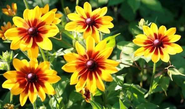 Five beautiful bright yellow flower close up