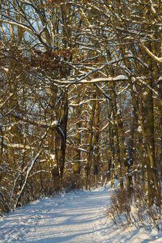 footpath in wintertime