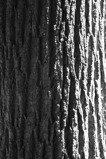Structure from a bark of an old tree