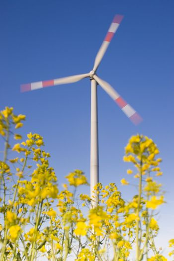 Wind turbine behind flowers of canola. Motion blurred.