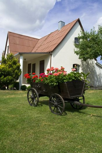 Yard's decoration. A waggon with wooden wheels and with flowers in bloom