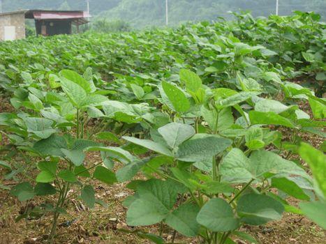 a vegetable farm in korea