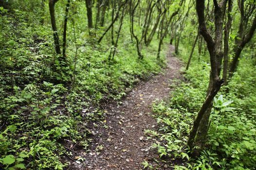 Rain Forest Pathway
