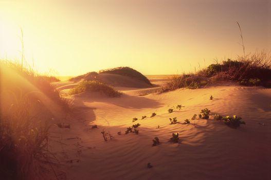 sand dunes National Seashore South Padre Island Texas