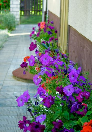 flowers against wall