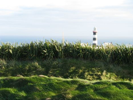 Lighthouse through the tall grasses