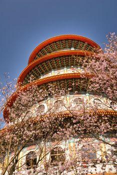 Pagoda and sakura