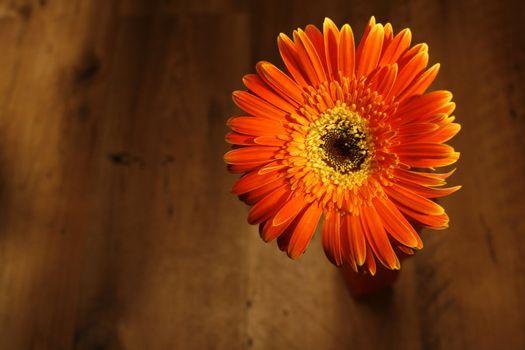 Orange flower on brown floor