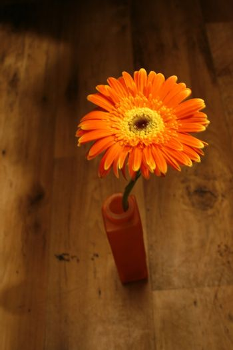 Orange flower in a vase on brown floor