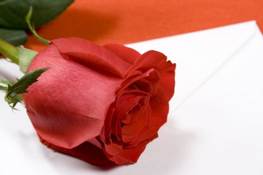 red rose and envelope on red background
