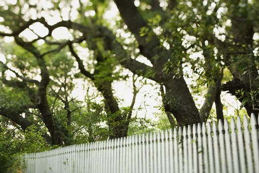 White picket fence with trees.