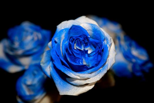 An unusial blue rose bouquet