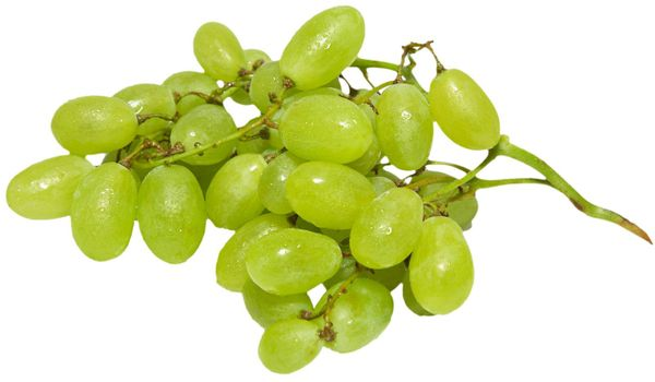 A branch of green grapes