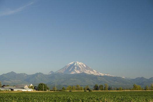 Mount Rainier towers over a rural cornfield near Auburn, Washington.