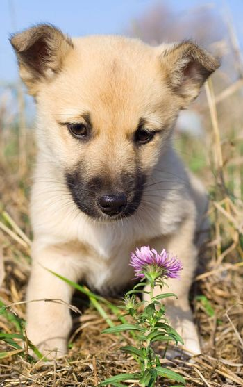 puppy smelling pink flower on blue sky background