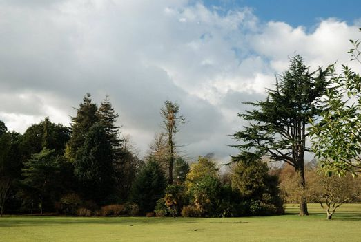 bute park in cardiff in springtime in very nice sunny day with bluse sky and clouds
