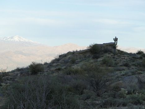 Lone saguaro on mountain top with snow capped mountains in the background