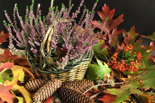 Autumn Cornucopia - colorful leaves