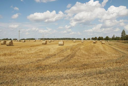 Hay bales standing ready to be collected. Lithuania