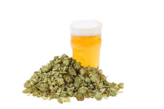 glass full of beer and hop isolated on white background