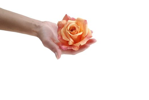 orange flower kept in a hand isolated on the white background