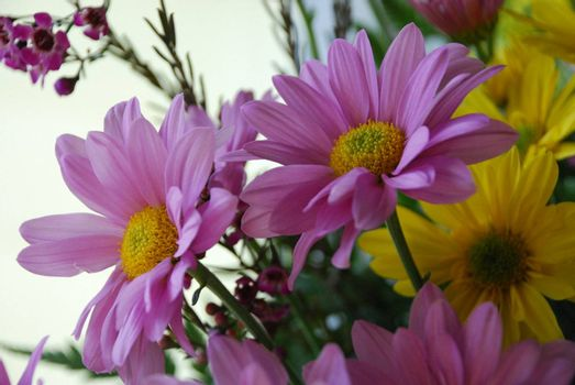Pink Daisies in a bouquet