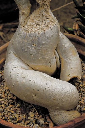 A Plant root