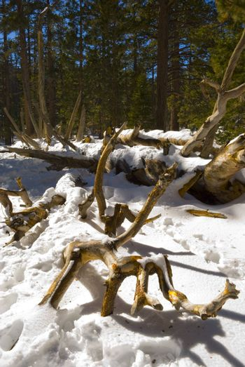 A tree trunk exposes itself from beneath the snow