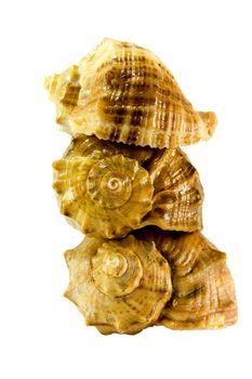 three shells