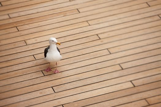 Seagull on deck