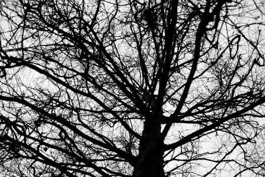 bare winter tree silhouette