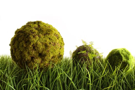 Moss covered balls laying in tall  grass