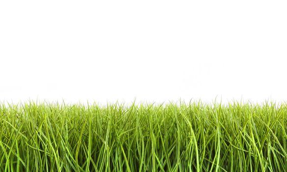 Tall grass against a white