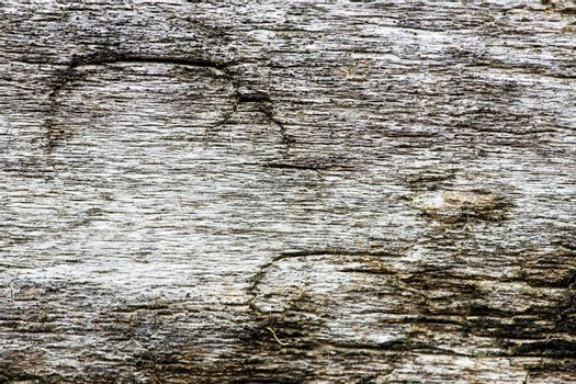 Old weathered drift wood texture