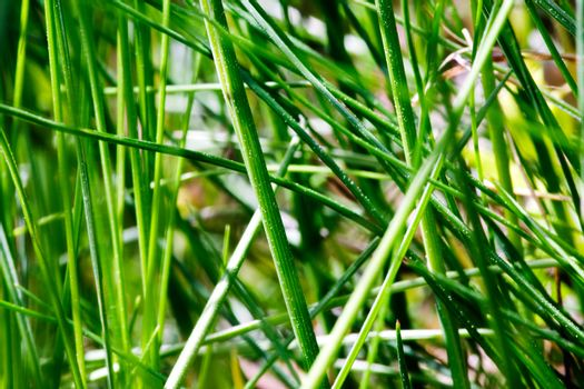 Grass texture background image - abstract.