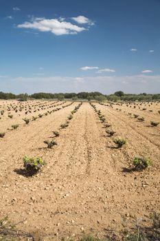 big cultivation