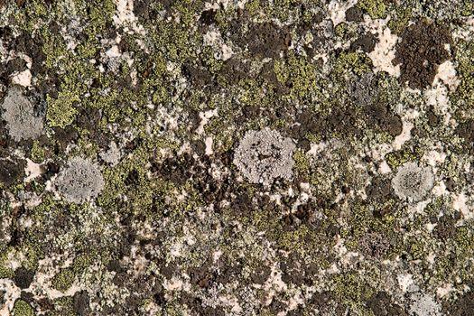 A background rock moss texture