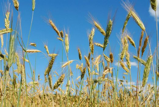 Cereal against blue sky