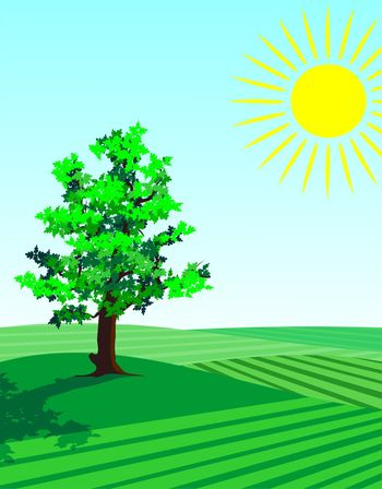 four seasons illustration: springtime single tree in the fields with fresh growing greenery