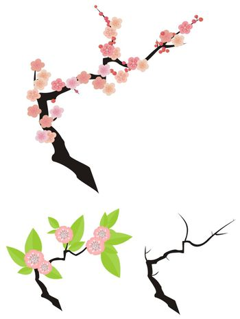 Cherry twig naked, with flowers, with flowers and leaf