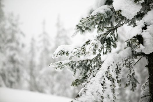 White winter texture and mood image.  A winter setting with lots of snow.