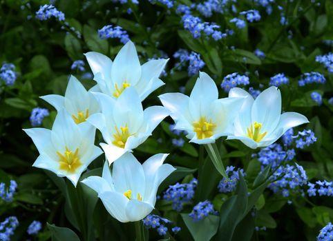 Flowers in a famous botanic garden