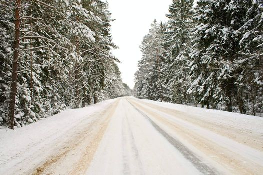 snowy country road in forest
