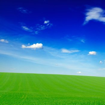 white clouds and green field