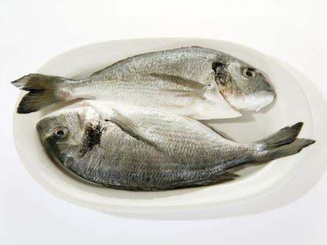 Prepared porgies on a white plate